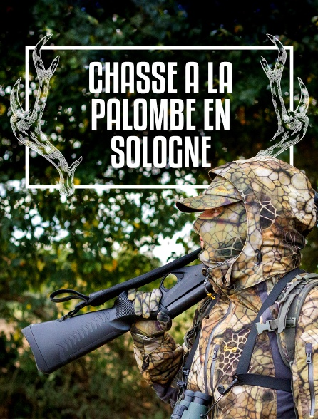 Chasse à la palombe en Sologne