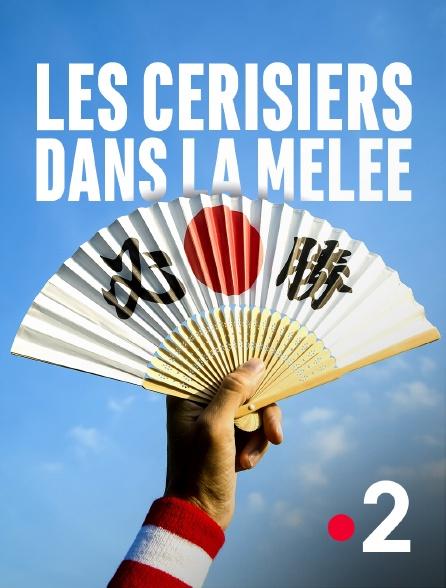 France 2 - Les cerisiers dans la mêlée