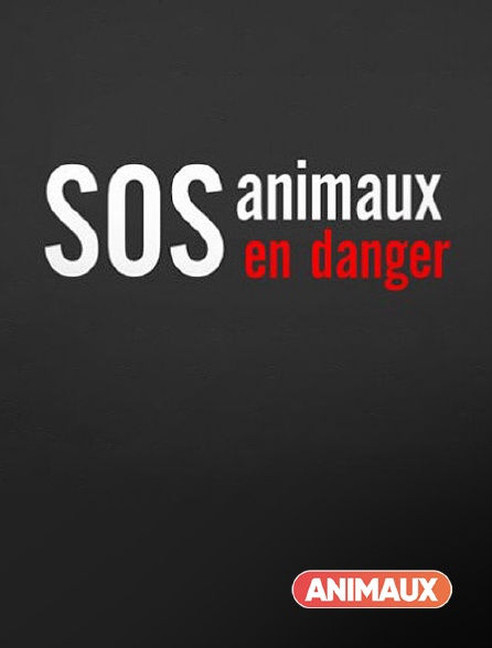 Animaux - S.O.S. animaux en danger