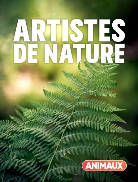 Animaux - Artistes de nature