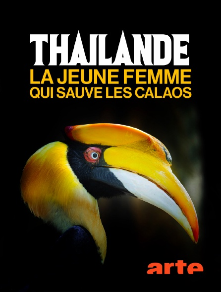 Arte - Thaïlande, la jeune femme qui sauve les calaos