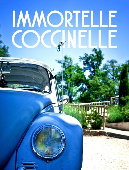 Immortelle Coccinelle