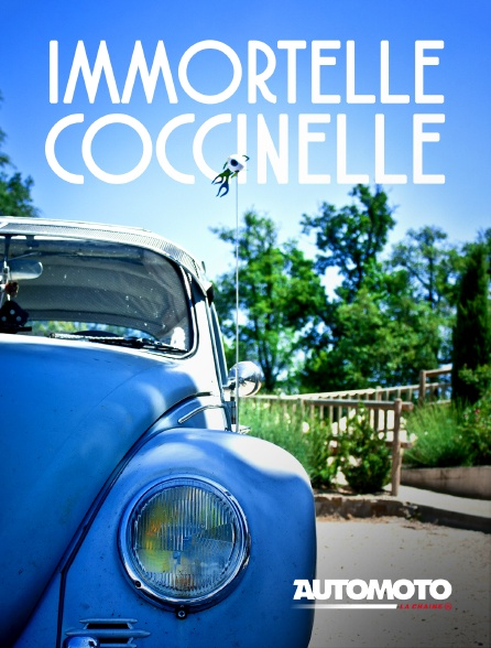 Automoto - Immortelle Coccinelle