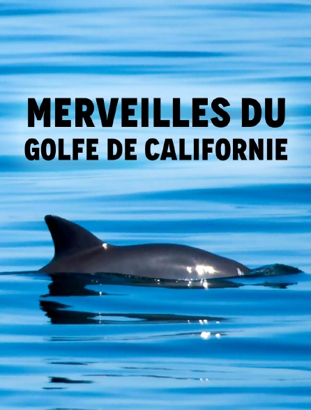 Merveilles du golfe de Californie
