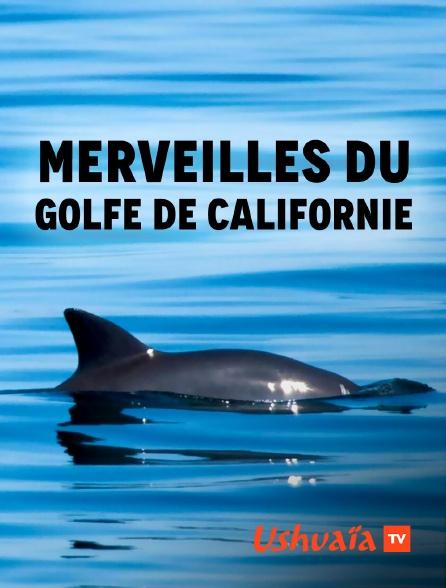 Ushuaïa TV - Merveilles du golfe de Californie