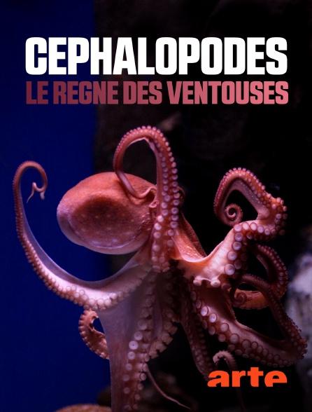 Arte - Céphalopodes : le règne des ventouses