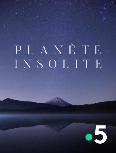 France 5 - Planète insolite