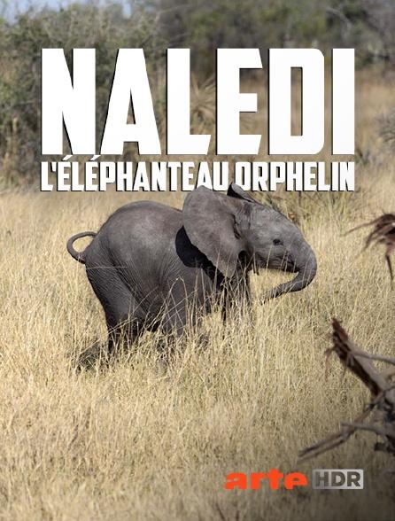 Arte HDR - Naledi, l'éléphanteau orphelin