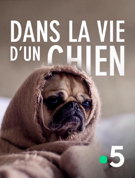 France 5 - Dans la vie d'un chien