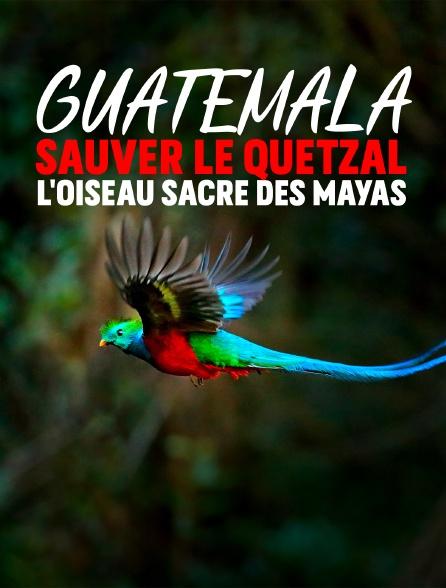 Guatemala : Sauver le Quetzal, l'oiseau sacré des Mayas