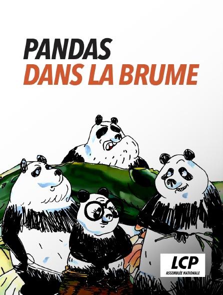 LCP 100% - Pandas dans la brume