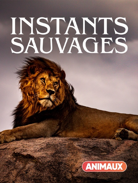 Animaux - Instants sauvages