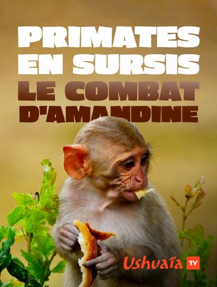 Ushuaïa TV - Primates en sursis, le combat d'Amandine