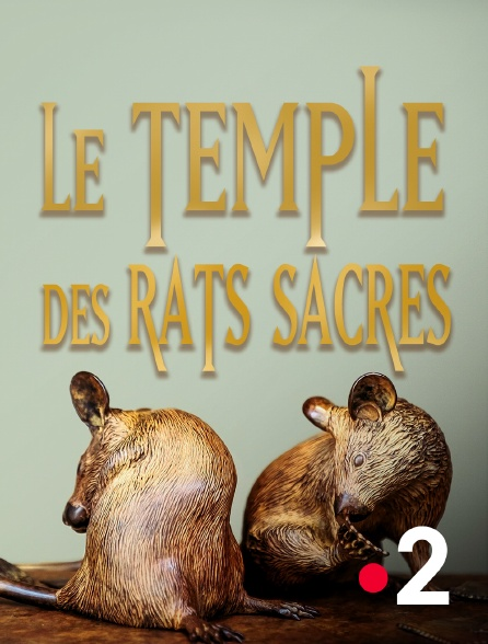 France 2 - Le temple des rats sacrés