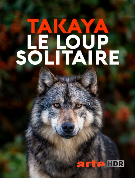 Arte HDR - Takaya, le loup solitaire
