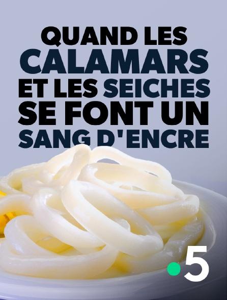 France 5 - Quand les calamars et les seiches se font un sang d'encre