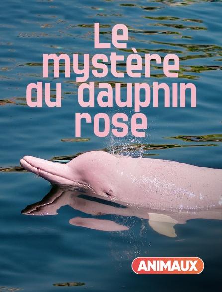 Animaux - Le mystère du dauphin rose