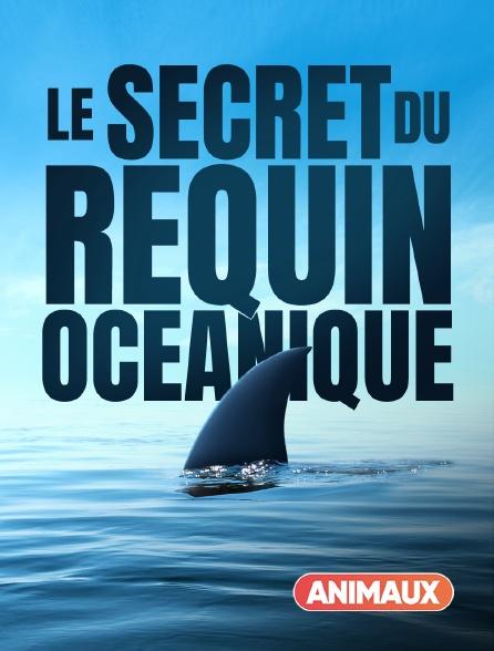 Animaux - Le secret du requin océanique