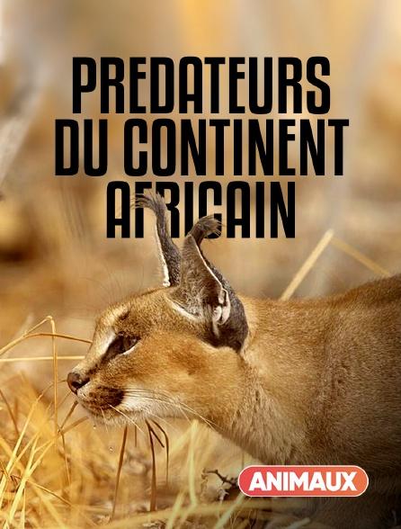 Animaux - Prédateurs du continent africain