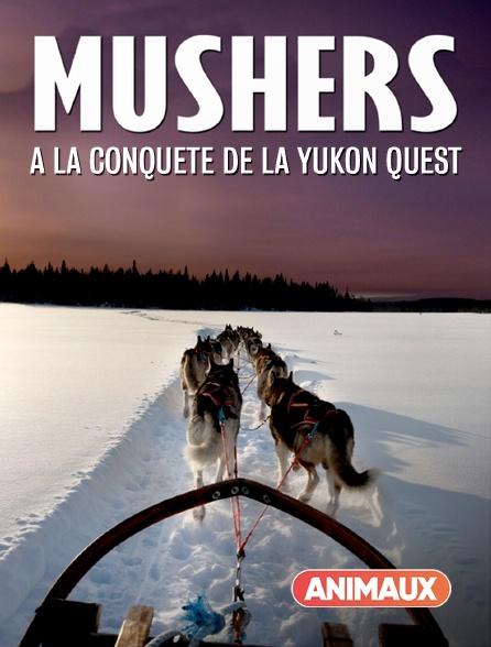 Animaux - Mushers : à la conquête de la Yukon Quest