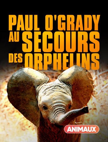 Animaux - Paul O'Grady, au secours des orphelins
