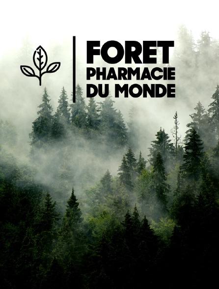 Forêt, pharmacie du monde