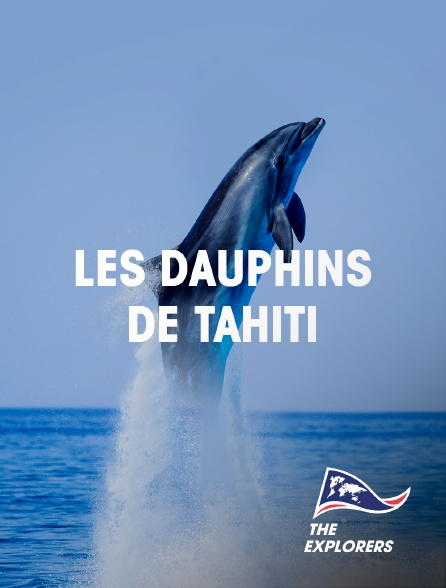 The Explorers - Les dauphins de Tahiti