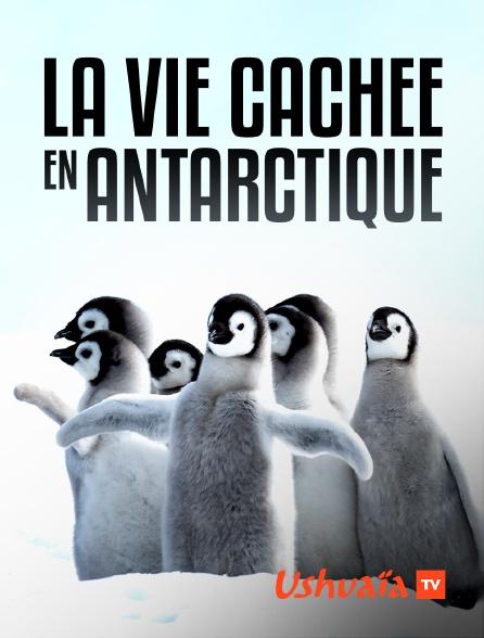 Ushuaïa TV - La vie cachée en Antarctique