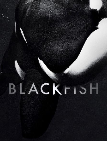 Blackfish : L'orque tueuse