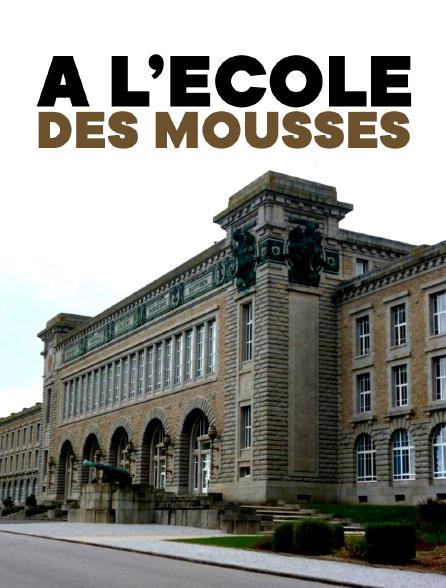 A L'ECOLE DES MOUSSES