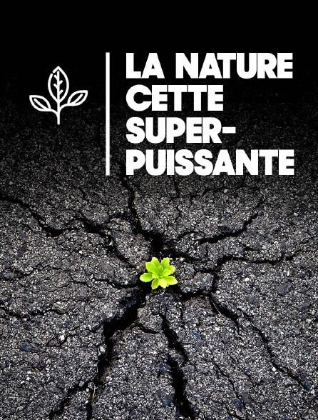 La nature, cette superpuissance
