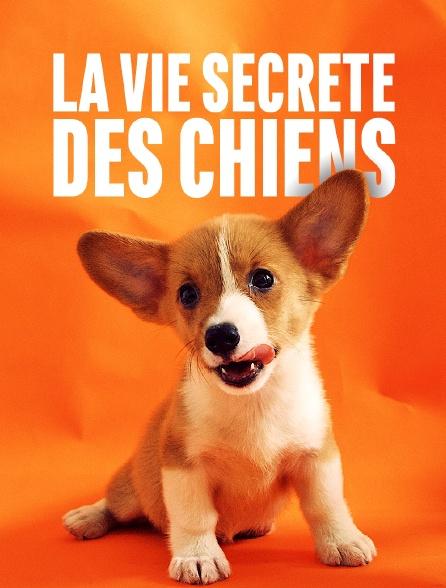La vie secrète des chiens