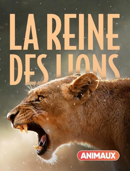 Animaux - La reine des lions
