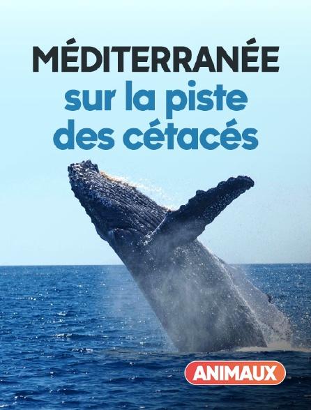 Animaux - Méditerranée, sur la piste des cétacés