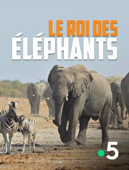 France 5 - Le roi des éléphants