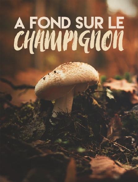A fond sur le champignon