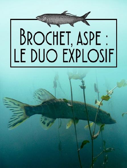 Brochet, aspe : le duo explosif