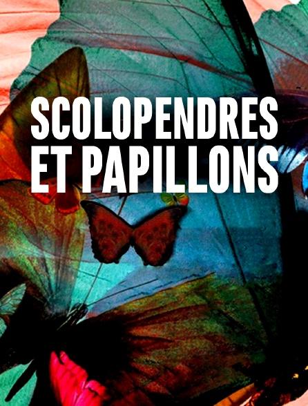 Scolopendres et papillons