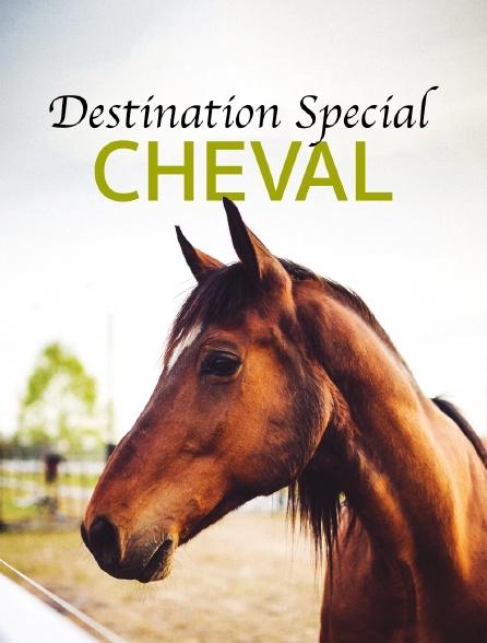 Destination Special : Cheval