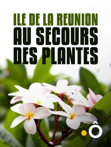 France Ô - Ile de La Réunion : au secours des plantes