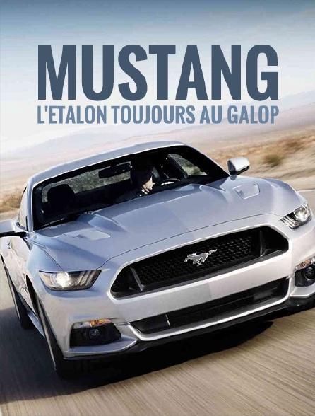 Mustang, l'étalon toujours au galop