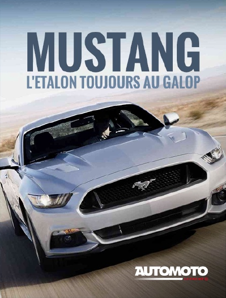 Automoto - Mustang, l'étalon toujours au galop