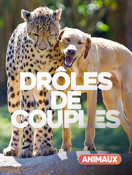 Animaux - Couples insolites