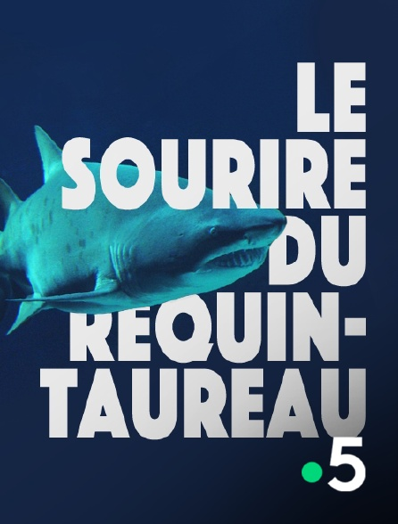 France 5 - Le sourire du requin-taureau