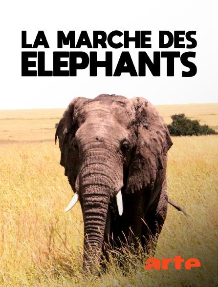 Arte - La marche des éléphants