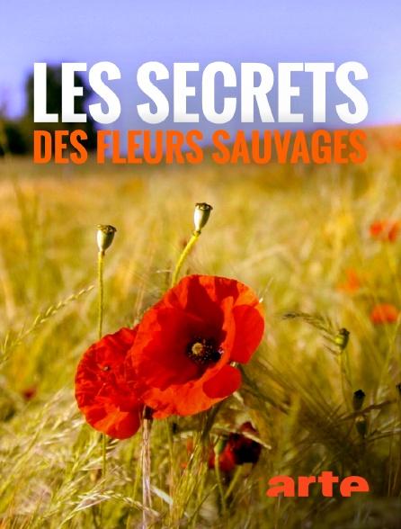 Arte - Les secrets des fleurs sauvages