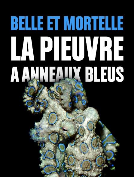 Belle et mortelle, la pieuvre à anneaux bleus