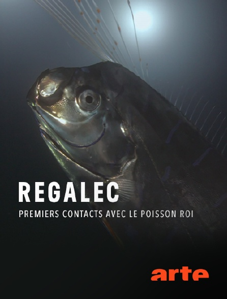 Arte - Régalec, premiers contacts avec le poisson roi