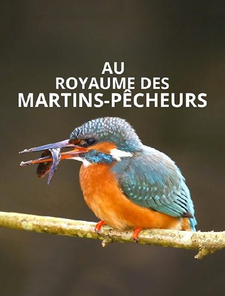 Au royaume des martins-pêcheurs