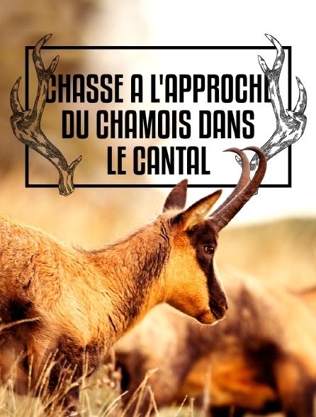 Chasse à l'approche du chamois dans le Cantal